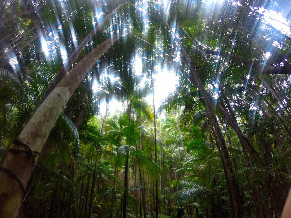 Fraser Island Travel Diary Australien Reisetagebuch Review